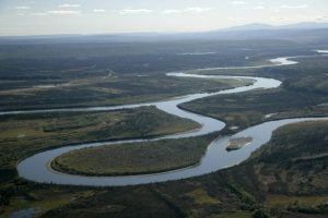Figure 8.2.3: The confluence of the Alatna and Koyukuk Rivers near the western border of the Kanuti National Wildlife Refuge in Alaska. Both rivers pictured are examples of meandering streams, with sinuous channels, deposition of sediment on point bars, and erosion along the cut banks. Notice the narrow neck separating the channel in the foreground. When this neck is eventually eroded away, the meander in the foreground will be abandoned and will create an oxbow lake.