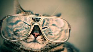 cat with wearing oversized glasses